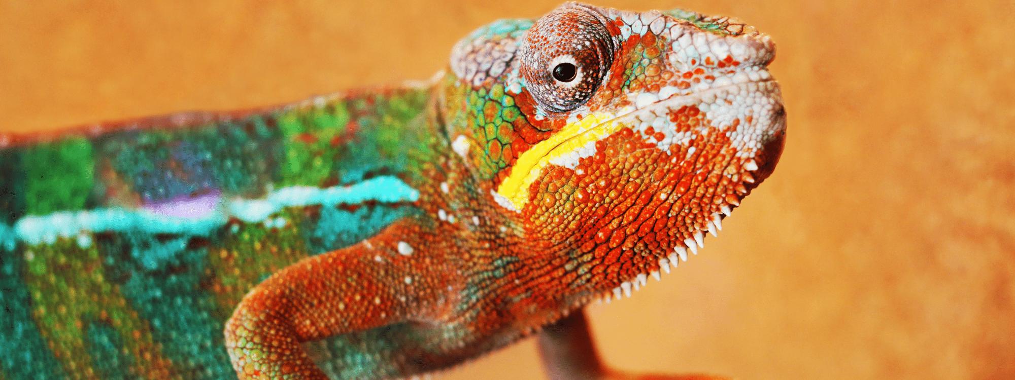 Projectkameleon - header home-